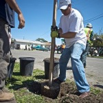 Planting Trees in the Iron Triangle