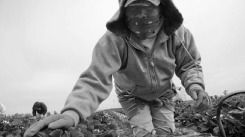 California Farmworker: Picking Peas Should Bring a Better Life
