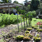 Want to Farm in Richmond? Urban Tilth Will Show You How