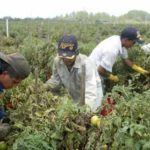 Fate of Farmworker Overtime Bill in Hands of the Assembly