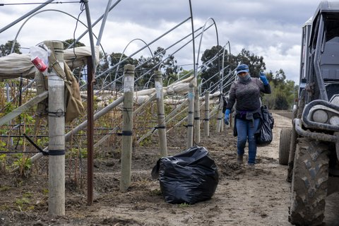 No Face Masks So California's Farmworkers Are Left Unprotected