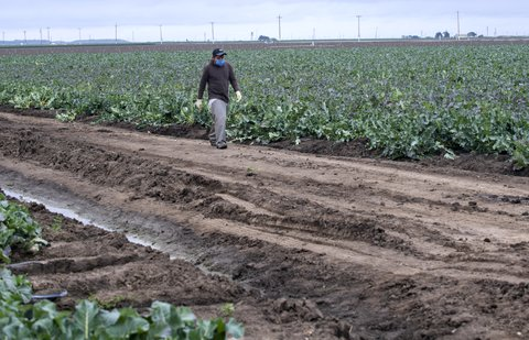 'The Perfect Storm of Vulnerability': Protection In the Fields Doesn't Follow Farmworkers Home