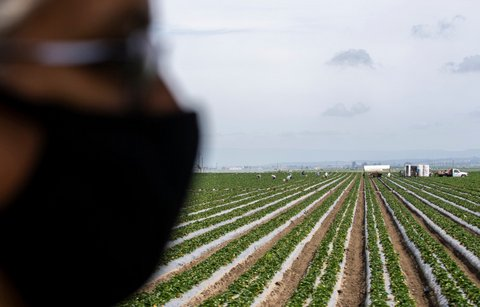 How California Farms Can Survive the Post-Pandemic World