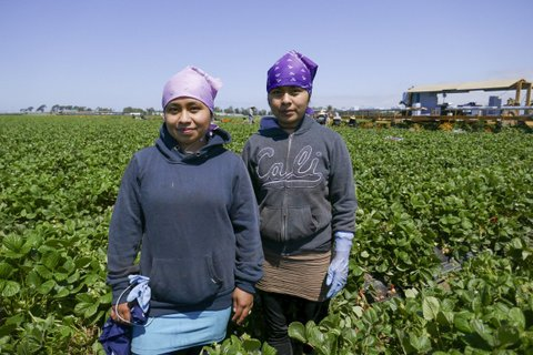 Two sisters in an agricultural field.