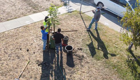 Overhead view of people planting a tree,