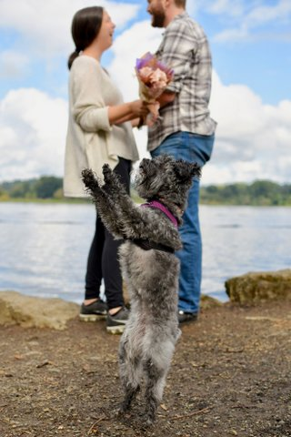 Small gray terrier on its hind legs with a man and woman and lake in the background.